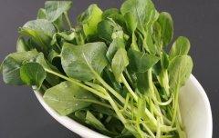 预防幽门螺杆菌看这些蔬菜的疗效